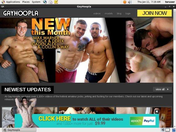 Gayhoopla Account Information